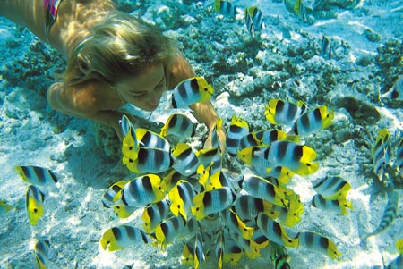 The South Pacific Snorkeling with Butterfly Fish